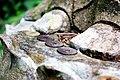 Coins at the feet of a Buddha, Jōchi-ji temple (3801577373).jpg