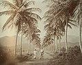 Collectie Nationaal Museum van Wereldculturen TM-60062244 Twee mannen op een landweg omzoomd door palmen Trinidad fotograaf niet bekend.jpg