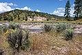 Continental Divide Trail - Flickr - aspidoscelis (35).jpg