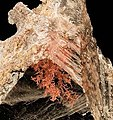 Copper-Gypsum-203925.jpg
