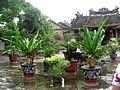 Cour devant un temple au Vietnam.jpg