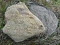 Crinoideos (La Laguna de Lago de Babia).001 - Cabrillanes (Leon).jpg