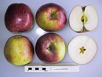 Cross section of Alnarp's Favorit, National Fruit Collection (acc. 1968-056).jpg