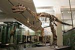 Cryolophosaurus ellioti LH2099.jpg