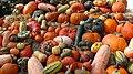 Cucurbita fruits.jpg
