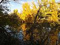 Cuenca del río Manzanares Monte del Pardo 03.jpg