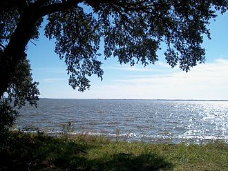 Sound (geography) - A live oak on Knotts Island, North Carolina, overlooks the Currituck Sound.