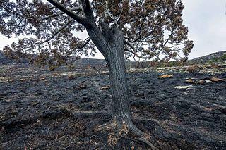 2016 Tasmanian bushfires