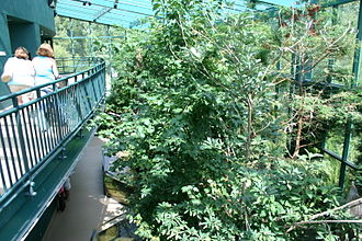Virginia Living Museum - Two-story indoor exhibit of a cypress swamp at the museum
