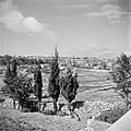 Cypressen buiten de stadsmuur van Jeruzalem met zicht op de stad en op de stadsm, Bestanddeelnr 255-5144.jpg