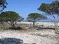 Dünen von Budoni - panoramio.jpg