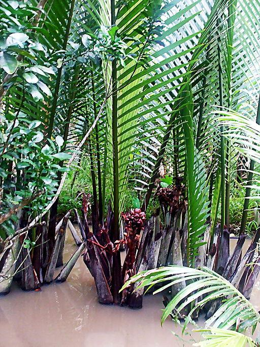 Dừa nước ở Việt Nam