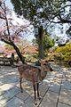 Deer and Sakura (7115817659).jpg