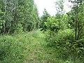 Degučių sen., Lithuania - panoramio (248).jpg