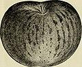Descriptive catalogue of fruit and ornamental trees, shrubs, vines and plants (1898) (20577604201).jpg