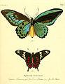Die ausländischen Schmetterlinge in Abbildungen nach der Natur (Tab. I) (6011985561).jpg