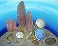 Diorama of an Ediacaran seafloor (44695869355).jpg