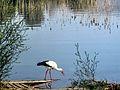 Dojran Lake 248.jpg
