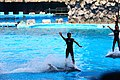 Dolphin show - Nagoya Aquarium - Japan (15676435848).jpg