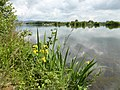Donau-Obermotzing.jpg