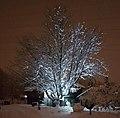 Dornbirn-Illuminated tree-Forachstrasse 117-01ASD.jpg