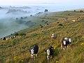 Downland, Mere - geograph.org.uk - 909564.jpg