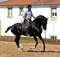 Dressage stallion 3.jpg