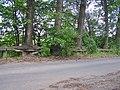 Drzewa - panoramio.jpg