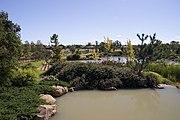 Dubbo garden