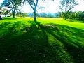 Ducks in Vilas Park - panoramio.jpg