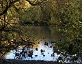 Ducks on Bow Park pond. READ INFO IN PANORAMIO-COMMENTS - panoramio.jpg