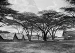 ETH-BIB-Zelte im Schatten der Schirmakazien im Serengeti-Camp-Kilimanjaroflug 1929-30-LBS MH02-07-0053.tif