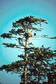 Eagle's nest POW 1986 FWS.jpg