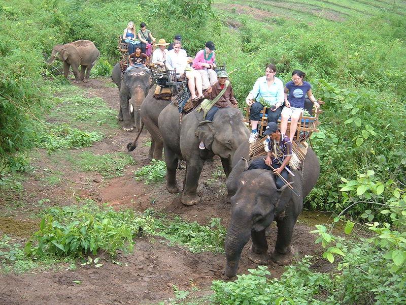File:Elephant ride in Chiang Rai Province 2007-05 7.JPG