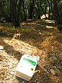 Empty Glyphosate (Herbolex) container discarded in Corfu olive grove.jpg