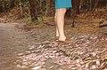 EnchantedForest.FINY.5September1992 (20575380096).jpg