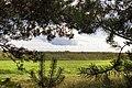 Engure - panoramio (1).jpg