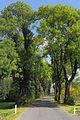 Eschenallee bei Rastbach 05 2014-10 NDM KR-085.jpg