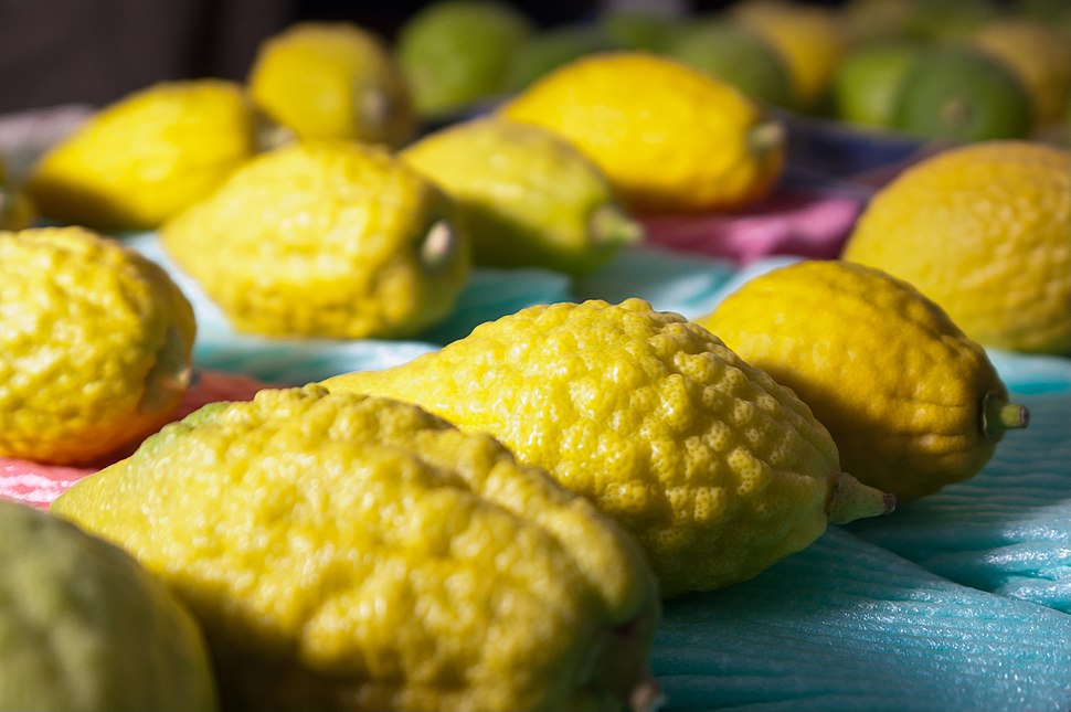 Etrog at the Market of the 4 Species at Bnei Brak