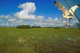 エバーグレーズ国立公園の画像 p1_1