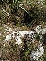 Everglades Caprock - panoramio (1).jpg