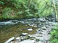 Exmoor , The River Barle and Riverbank - geograph.org.uk - 1507890.jpg