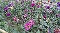 FLOWERS AT RAMNA PARK.jpg