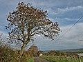 Fairlie Moor Road - geograph.org.uk - 1025237.jpg