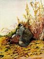 Falconry sport of kings (1920) Goshawk striking pheasant.png