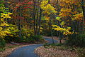 Fall-foliage-wv-winding-country-road - West Virginia - ForestWander.jpg