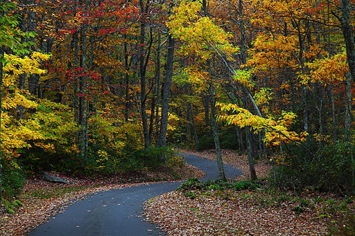 Fall-foliage-wv-winding-country-road - West Virginia - ForestWander