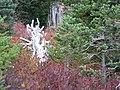 Fall colors (a082ae5367eb42c68ec0a1d2370769e9).JPG