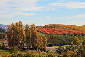 English: Fall in Napa Valley