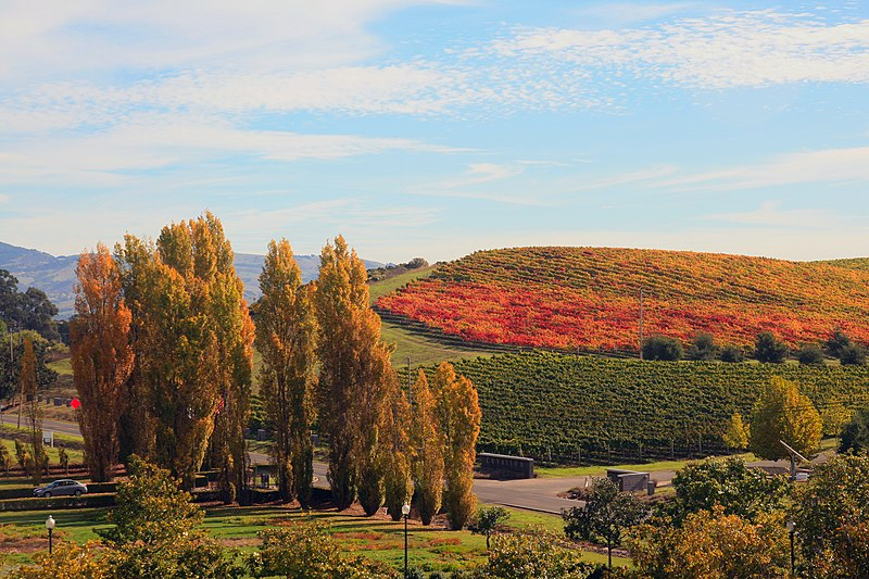 File:Fall in Napa Valley.jpg